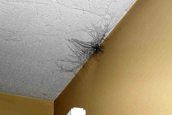 Twee eenvoudige methoden om schimmel van muren en plafonds te verwijderen